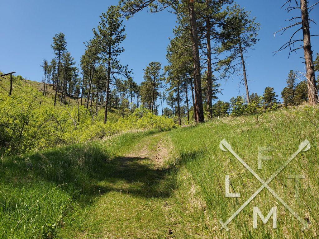 A grassy trail leads up the middle of a hill.  Tall trees line either side of the trail in a scattered pattern.