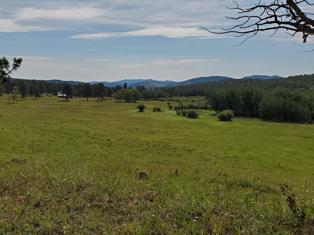 The full view of the meadow that you walk around on the property.  YOu can see the homestead in the distance along with trees and shrubs across from the grassy field.