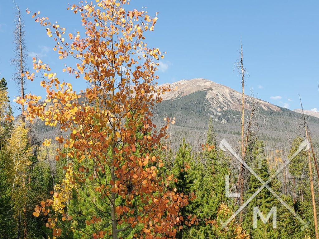 A red leafed aspen tree in the foreground with a mountain peak in the background from the Gore Range Trail