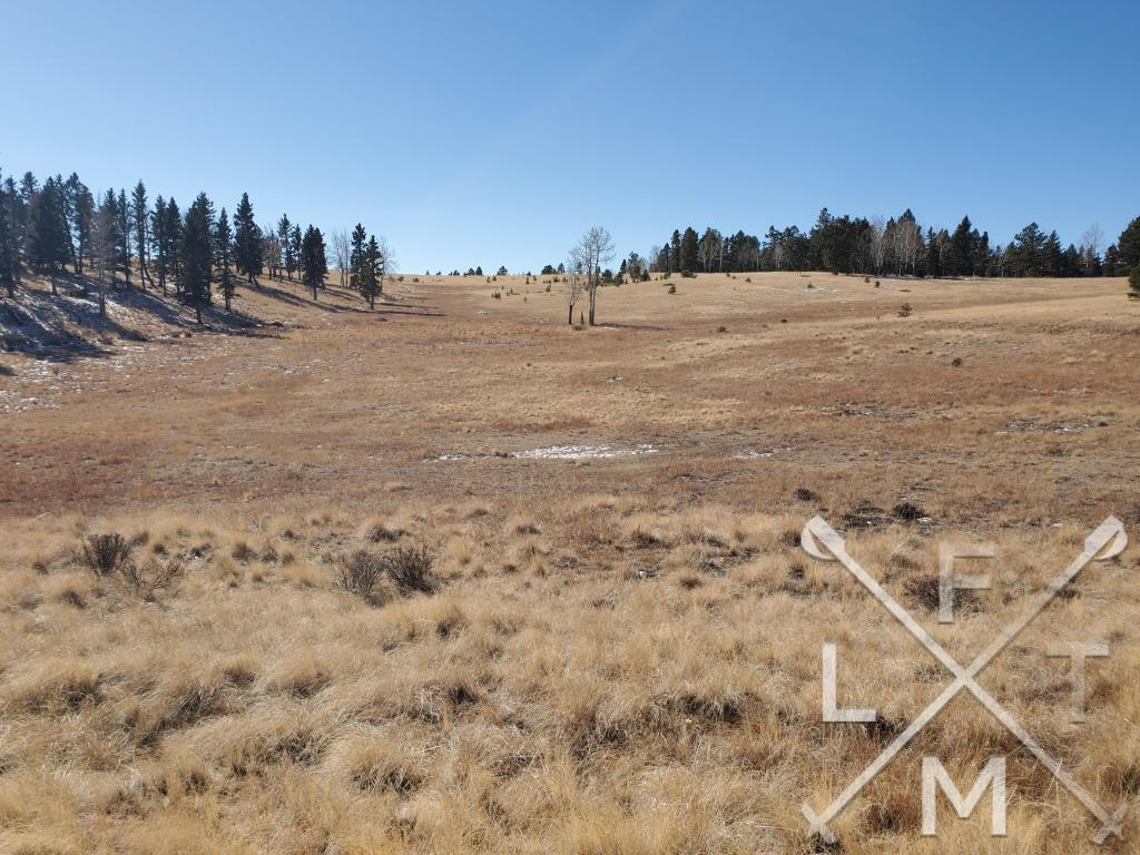 The wide open meadow from trail 17.