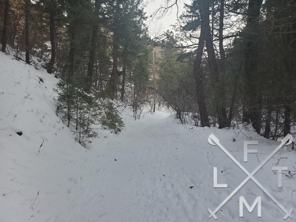 The snow covered Plymouth Creek Trail surrounded by tall pine trees