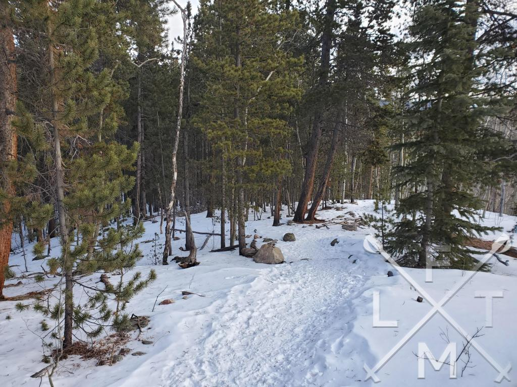 Tall pine and aspen trees surrounding the snow covered trail during the first part of the Hells Hole trail.