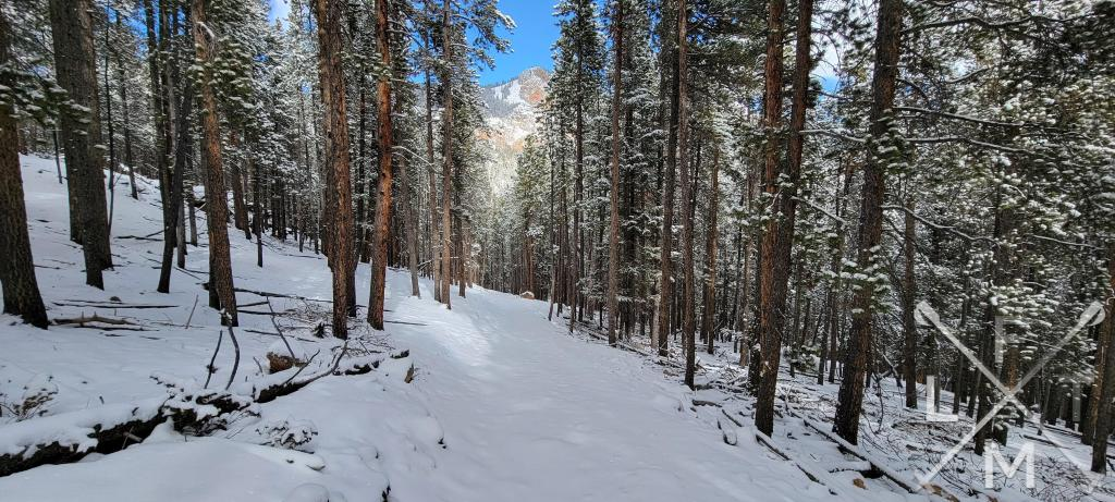 A completely snow covered trail in between snowy pine trees.  The trail leads to a sun draped mountain.  Snowshoe basics are important to know before going out on the trail