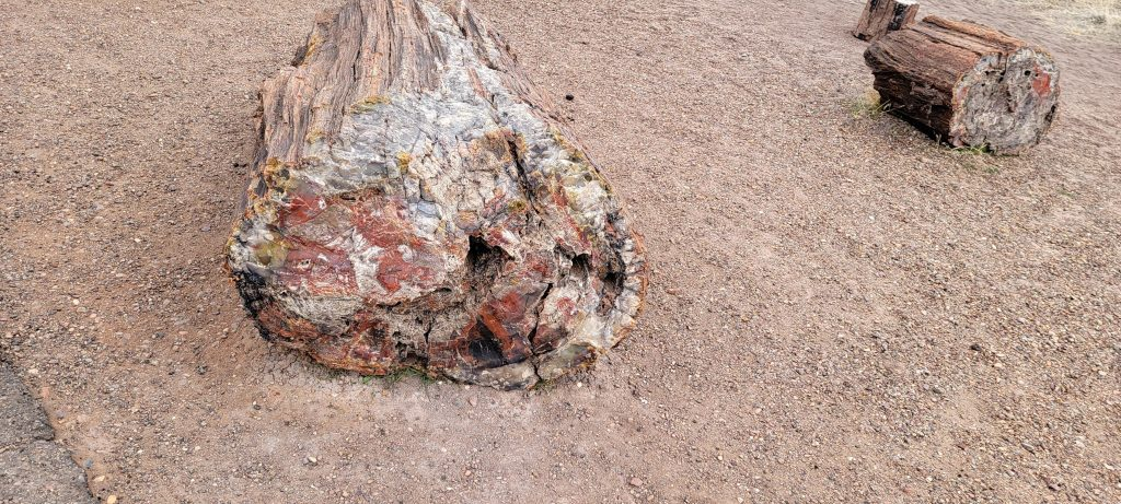 More crystalized fossils that look like tree chunks at the Crystal Forest Path.