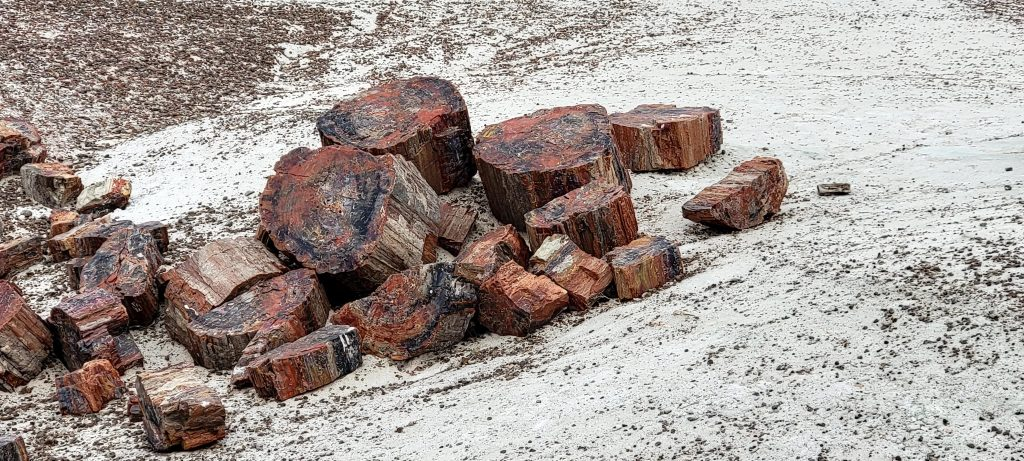 """A pile of red and purple """"stumps"""" of fossils laying on white rock on the Crystal Forest Path."""