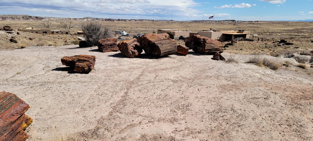 A series of smaller stumps overlooking the musuem on the Giant Logs path in the Petrified Forest National Park